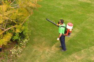 Garden Pests control tips