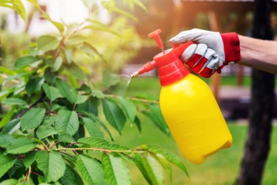 avoid garden pests