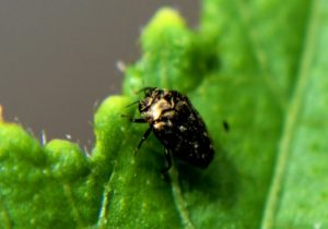 common garden pest