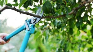 Trim Trees in Your Yard